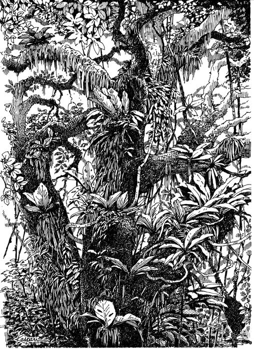 Tropical forest scene by Deborah Kaspari