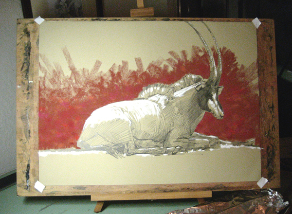 Sable Antelope – Drawing The Motmot