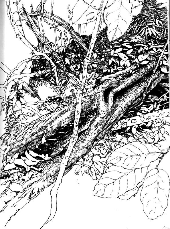 Tree Log Drawing Fallen Tree