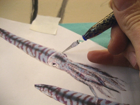 Transferring the Drawing- Belemnites