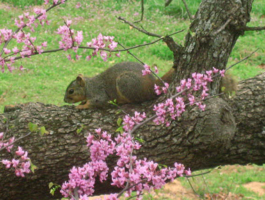 Spring in Squirrelville