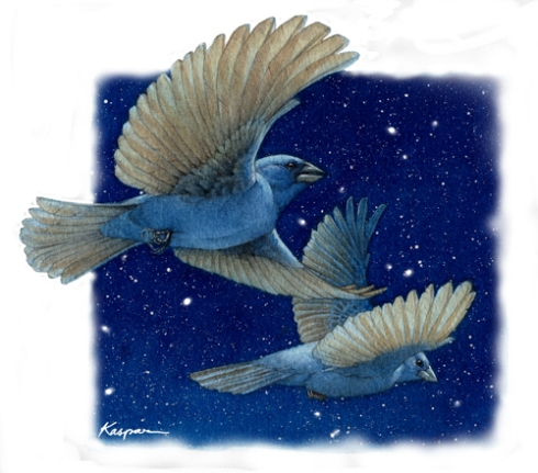 Night Flight Indigo Buntings