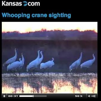 Whooping Cranes in Kansas