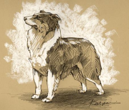Australian Shepherd, pencil on Rives BFK, white pastel