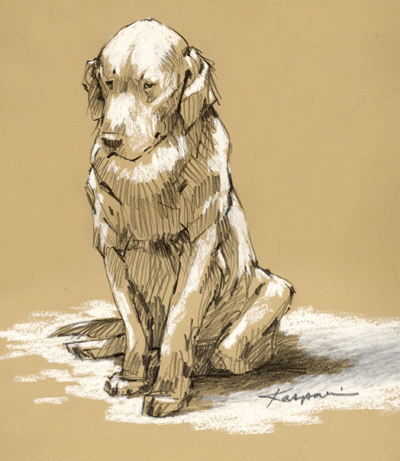 Woebegone Golden Retriever, pencil on Rives BFK with whitepastel
