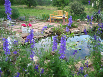 Larkspurs, pond