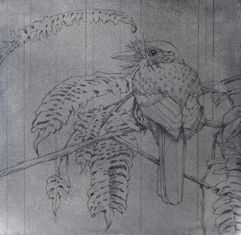 Whitewhiskered Puffbird, Panama