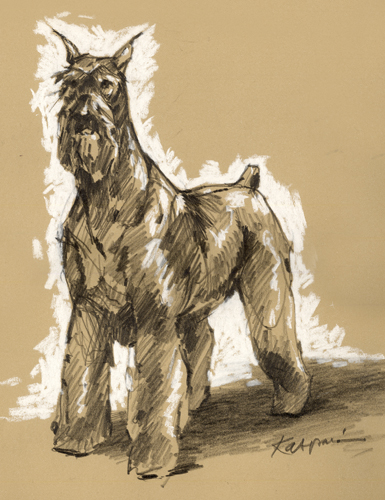 Giant Schnauzer, pencil on Rives BFK with white pastel
