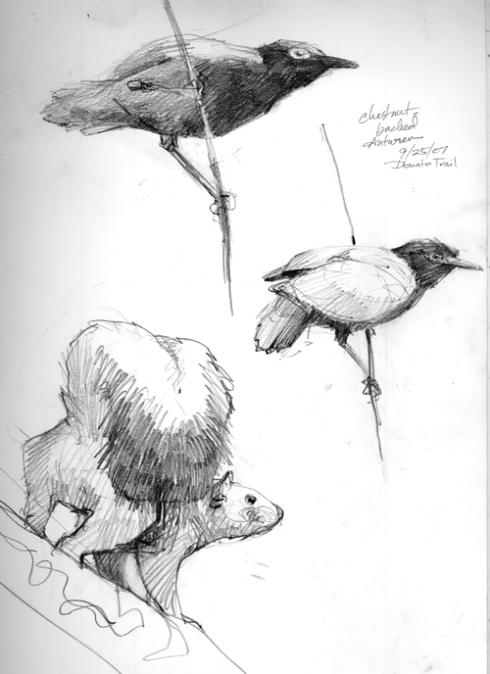 chbackantbirdsquirrel.jpg