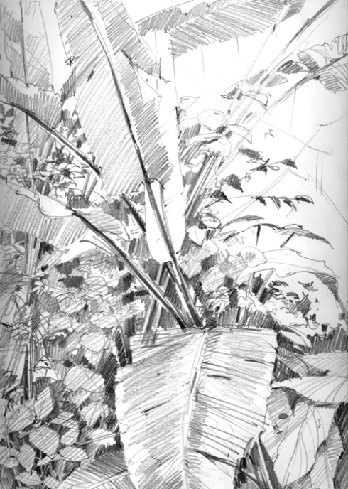 heliconias.jpg