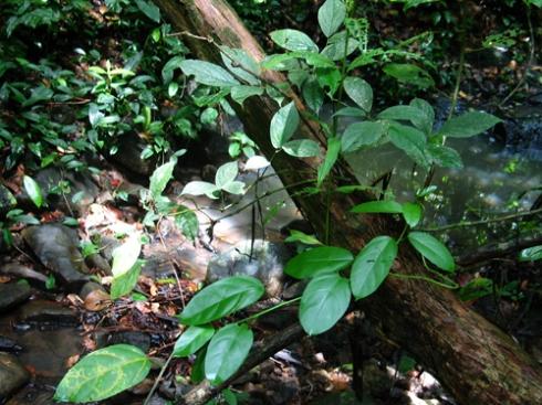 streamforest.jpg