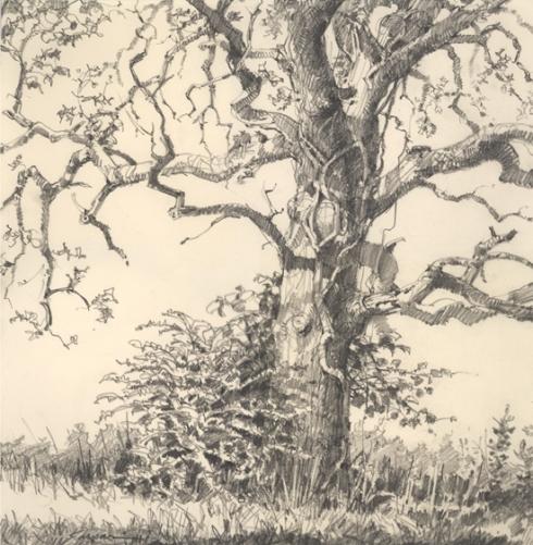 oak4.jpg