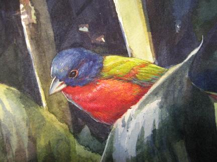 cannabuntingbird.jpg