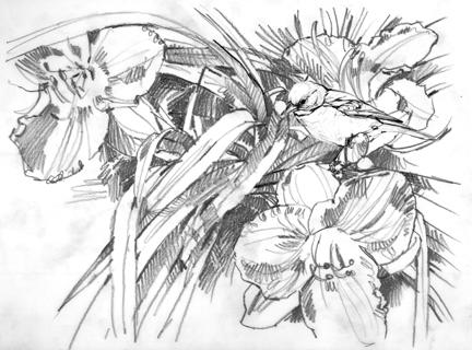 daylilypencil.jpg