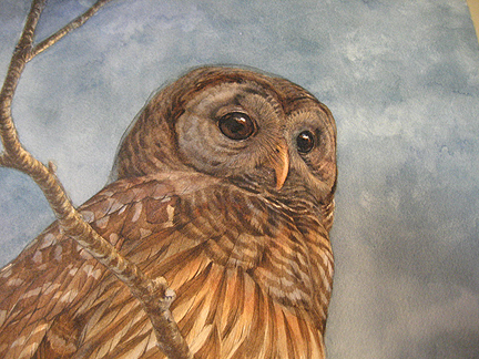 owlupper.jpg