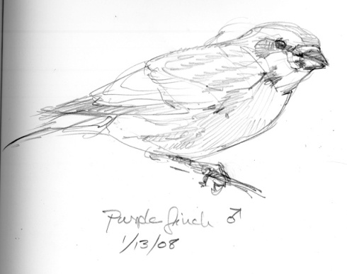 purplefinch.jpg