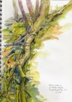 Nature in motion: a birch tree sprouts on a stream bank, gets thirsty, grows a 25 foot long root down to the water.