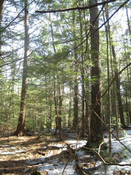 latewinterwoods.jpg