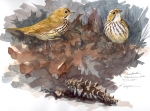 Ovenbirds, Harvard Forest