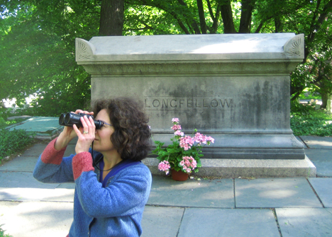 Snagging a warbler for Longfellow, Mt. Auburn Cemetery.