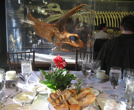 Fine dining with triceratops. Harvard Museum of Natural History.