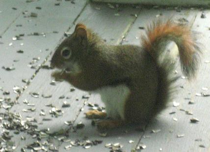 The world's cutest squirrel.