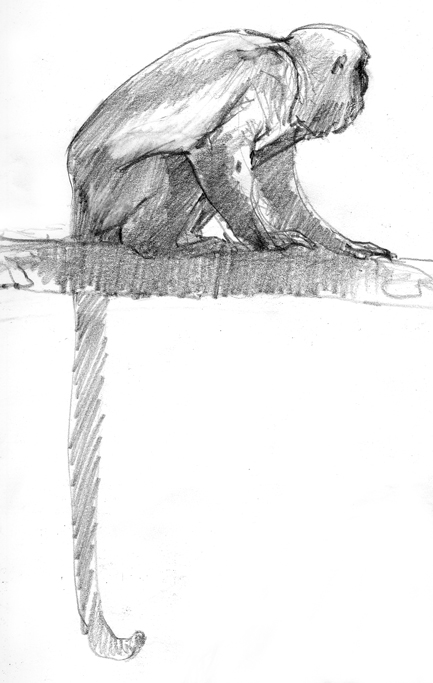 Howler monkey, drawn in Panama last year