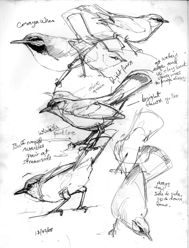 Line Drawing Illustration Artists : Mysterious sounds wondrous sights and birds