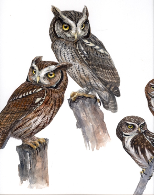 Tropical screech owls and a piece of ferruginous pygmy in watercolor.