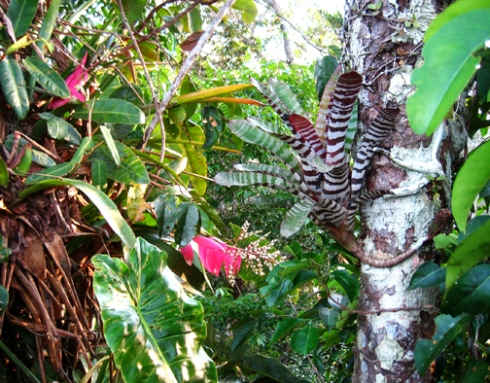 bright epiphytes, flowering plants, orange fruit and a million brilliant butterflies.