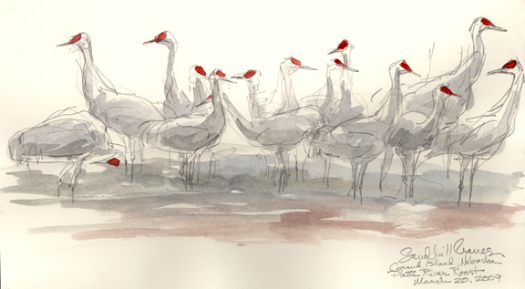 It Was Twilight And Sandhill Cranes >> Drawing Nebraska's Sandhill Cranes – Drawing The Motmot