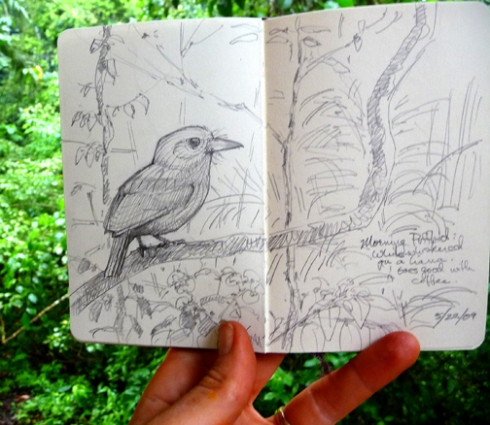 Whitewhiskered puffbird sketched this morning over a cup of coffee.