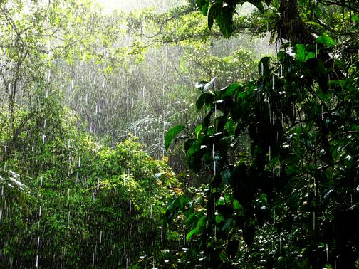 Finally the Rainy