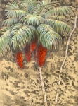 "Astrocaryum palm with hanging fruit clusters. 18""x24"" pastel and graphite plein air, drawn on Barro Colorado Island."