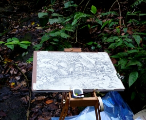 This is my setup for drawing plein air in the rainforest: a wooden folding easel, drawing board, drafting tape, a yogurt container to hold my pencil and sharpener, and plastic, lots of plastic.