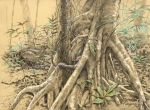 "Cecropia roots and great tinamou. 24""x18"" pastel and graphite on Rives BFK, drawn on Barro Colorado Island."
