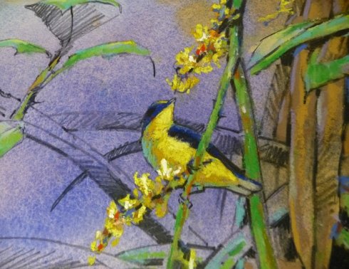 Closeup detail, thick-billed euphonia