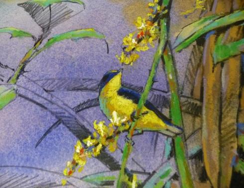 Closeup detail, thick-billed euphonia