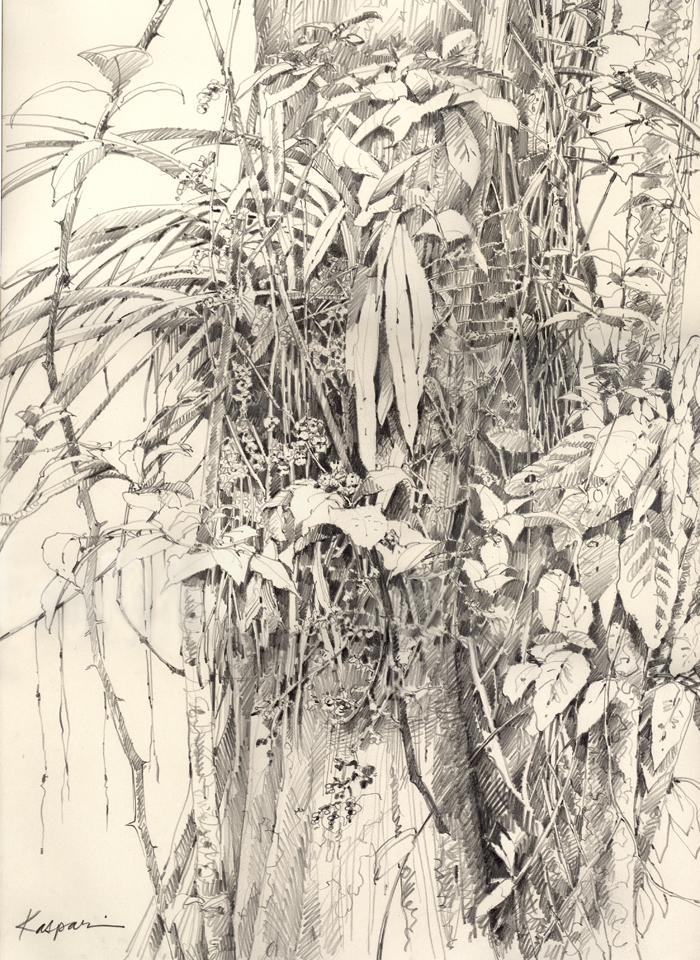In the rainforest visual riches grow on trees this is a plein air
