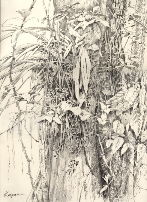 In the rainforest, visual riches grow on trees. This is a plein air drawing of a bright yellow orchid growing in a spray of blossoms and strappy leaves, mingled with vines, nearby shrubs and the leaves of its host tree.