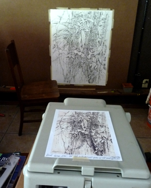 Enlarging the orchid drawing with a projector.