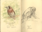 Whitewhiskered puffbird and howler monkey. BCI.