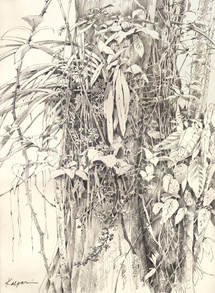 Orchid Tree Drawing by Zeladoniac | Published June
