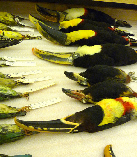 A drawerful of toucans; I felt like Daisy in the Great Gatesby: ""