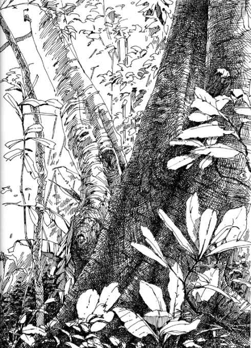 Monkeys watched over my shoulder as I drew this one. BCI 2007.