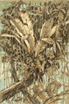 Peruvian Amazon Bromelliad, graphite and pastel on paper