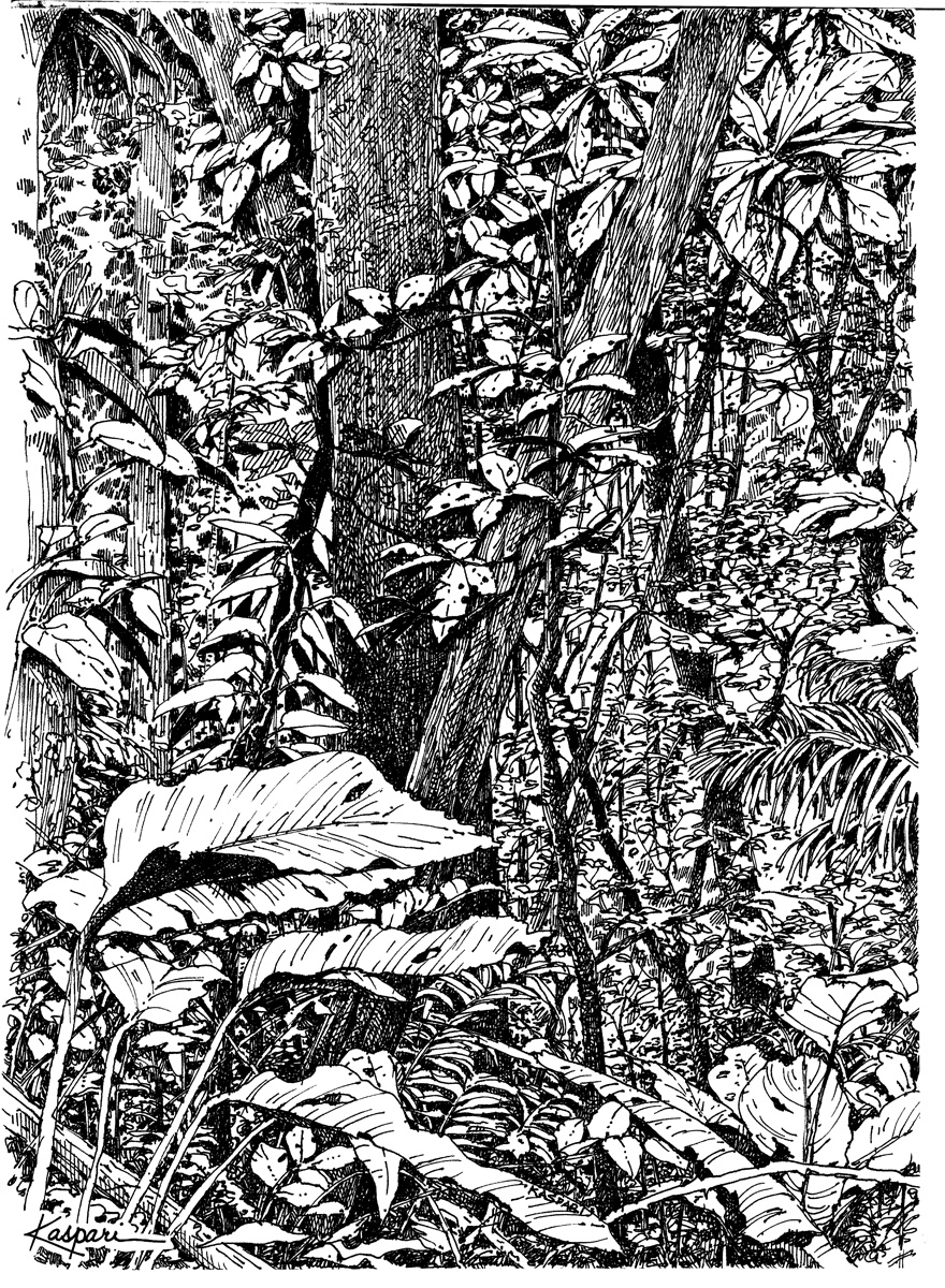 Ink Drawings Of Nature