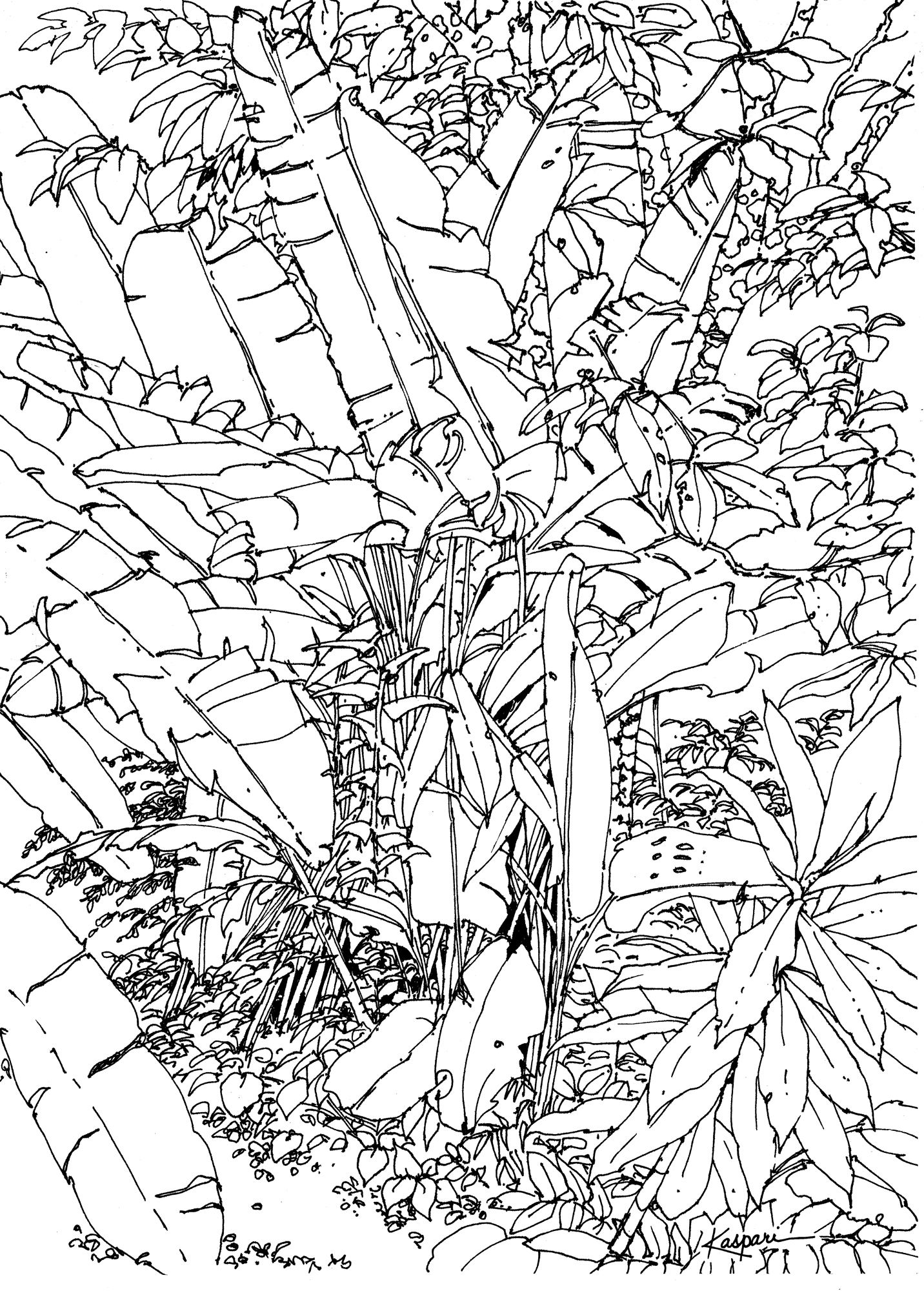 Plein Air Pen and Ink Drawings – Drawing The Motmot