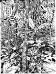 Barro Colorado Island, Panama, understory scene with hummingbird