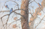 "Winter sun, eastern bluebirds. Graphite and pastel on paper, 12"" x 22"""